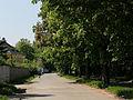 Wien-Hietzing - Naturdenkmal 350 - Hofjagdalle I.jpg
