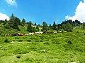 Wild horse - panoramio.jpg