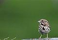 Wildlife birds 3 - West Virginia - ForestWander.jpg