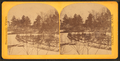 Williston's Grove, by Lewis, T. (Thomas R.), d. 1901.png