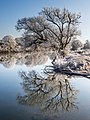 Winter-Regnitz-Baum-PC310023-PSD.jpg