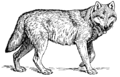 Wolf (PSF) cleaned 2.png
