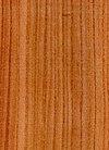 Wood Ulmus glabra.jpg