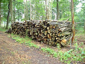 English: Wood pile in Savenake Forest. This wo...