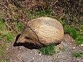 Wooden Hedgehog - panoramio.jpg