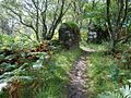Woodland walk - geograph.org.uk - 952304.jpg