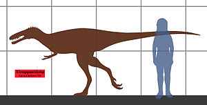 Xiongguanlong - Size compared to a human