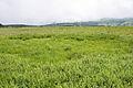 Yashimagahara Wetland 03.jpg
