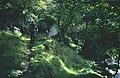 Yealand Woods - geograph.org.uk - 34918.jpg