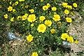 Zakynthos flora (35832948816).jpg