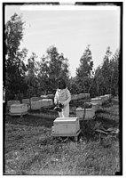 Zionist colonies on Sharon. Borochov. Girls' farm, bee culture LOC matpc.00203.jpg
