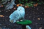 Zoo de Lisboa by Juntas 10.jpg
