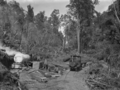 """""""Knight's tram, Raurimu"""", in a clearing in the bush, hauling logs. ATLIB 293489.png"""