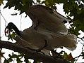 (1)Ibis Sydney 041.jpg