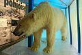Μουσείο Arktikum - panoramio.jpg