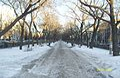 Алея на проспекте Ленина - panoramio.jpg