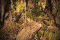 Бурундук в лесу у берегов Байкала.jpg