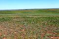 Вид с высоты 262 - panoramio (2).jpg