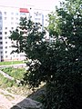 Двор на Красногвардейской. Фото Виктора Белоусова. - panoramio.jpg