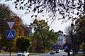 Дуб звичайний у парку Танкістів. Фото 1.jpg