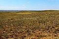 Жаркая степь в начале июля 2014 года - panoramio.jpg
