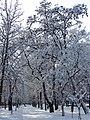 Ковалівський парк. Зима 2018.jpg