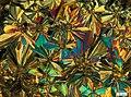 Микрокристаллы пиридила в скрещенных поляризаторах.jpg