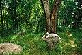 Могилы в святогорском монастыре - panoramio.jpg