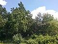 М. Херсон, Бериславське шосе,с.Наддніпрянське Дендрологічний парк Інституту зрошуваного землеробства НААН.jpg