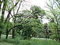 Парк шума Гази Баба во мај (144).JPG