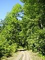 По дороге к лесу - panoramio.jpg