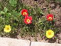 Растения в Седово 088.JPG