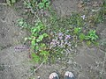 Растительность в балке.jpg