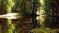 Река Трионска, резерват Тисовица 10.JPG