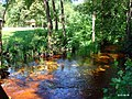 Речка Яльня - panoramio.jpg