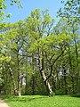 Сергиевка. Старые деревья.jpg