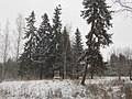 Сиворицы в снегу42.jpg