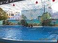 Сочинский дельфинарий парка «Ривьера». 81.jpg