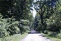 Стаза кроз Бојчинску шуму.jpg