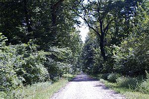 Forest of Bojcin - Through the Forest of Bojčin