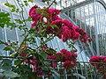 С.-Петербург - Ботанический сад 2.jpg