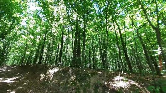 File:Теліженецький ліс.webm