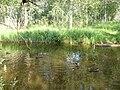Утки в Соленом озере у моста, Сольвычегодск.JPG