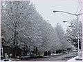 منظره زمستانی از میدان عبد القادر مراغی - panoramio.jpg