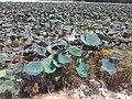 ทิวทัศน์ หนองกอมเกาะ - panoramio (14).jpg