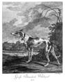 """""""Groſs Irlændisch Windspiel"""" """"Large Irish Greyhound"""".png"""