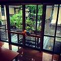 台風11号の近づく、夏の雨の日の特別養護老人ホームの中央テラスと、窓際の置き忘れられた縫いぐるみ。 (19739568815).jpg