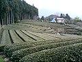実成寺裏の茶畑 - panoramio.jpg