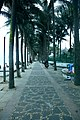 海南国际旅游岛——海口西海岸假日海滩林阴道景观(东南向) - panoramio.jpg