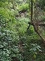 湮没的登云古道 - Abandoned Dengyun Mountain Trail - 2014.09 - panoramio.jpg